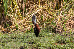 Pássaros Safari Lake Manyara Foto de Stock