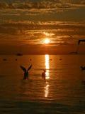Pássaros, sailboat, por do sol, mar Fotografia de Stock Royalty Free