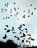 Pássaros selvagens ilustração royalty free