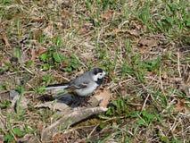 Pássaros selvagens Imagens de Stock