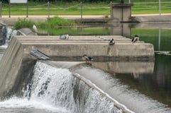 Pássaros selvagens na represa Foto de Stock