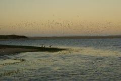 Pássaros sobre a lagoa Fotografia de Stock Royalty Free