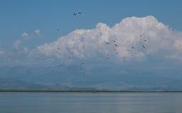 Pássaros sobre o lago Skadar Fotografia de Stock Royalty Free