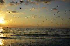 Pássaros sobre o oceano Fotografia de Stock Royalty Free