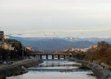 Pássaros sobre o rio de Kamo, Kyoto, Japão Fotografia de Stock Royalty Free