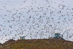 Pássaros sobre uma operação de descarga Fotos de Stock Royalty Free