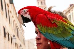 Pássaros tropicais bonitos do papagaio fotos de stock royalty free