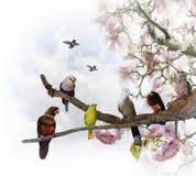Pássaros tropicais Imagem de Stock Royalty Free