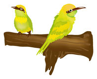 Pássaros verdes Fotos de Stock