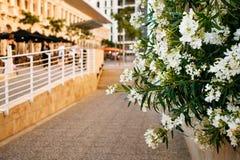 Pátio de Malta com flores Fotos de Stock