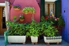 Pátio e jardim cor-de-rosa, Burano, Italy fotos de stock