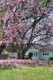 Pátio traseiro da primavera Fotos de Stock Royalty Free