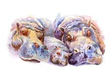 A pátria do hipopótamo que descansa no banco de rio Ilustração Stock