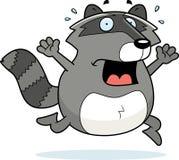 Pânico do Raccoon Imagens de Stock