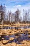 Pântano Imagens de Stock