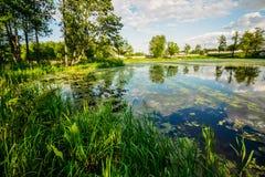 Pântano bonito com o duckwool na água Imagens de Stock