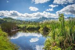 Pântano bonito em Havaí Fotografia de Stock