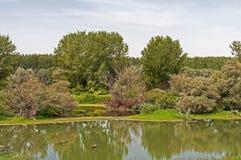 Pântano cercado por árvores Fotos de Stock