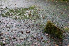 Pântano coberto de vegetação foto de stock