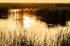 Pântano com a grama que reflete na água em Fotos de Stock