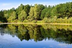 Pântano com reflexão na floresta Fotos de Stock Royalty Free