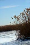 Pântano congelado.   Fotos de Stock
