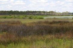 Pântano da água salgada no parque estadual calvo Florida do ponto Imagens de Stock