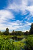 Pântano da floresta Imagem de Stock Royalty Free