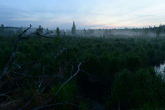 Pântano da floresta antes do alvorecer em um embaçamento enevoado Fotografia de Stock Royalty Free