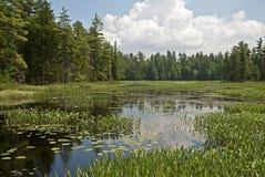 Pântano da região selvagem em EUA do nordeste Imagem de Stock