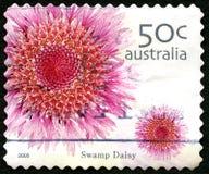 Pântano Daisy Australian Postage Stamp imagens de stock royalty free
