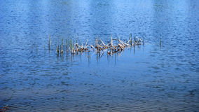 Pântano de água doce Foto de Stock Royalty Free