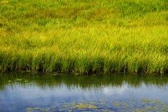 Pântano de água doce gramíneo Foto de Stock Royalty Free