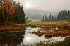 Pântano de Adirondack fotografia de stock