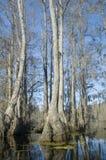 Pântano de Cypress Imagens de Stock Royalty Free