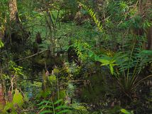 Pântano de Florida do fim do verão de HDR Imagens de Stock Royalty Free