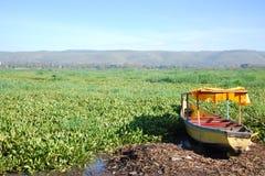 Pântano de flutuação da planta de Victoria de lago Foto de Stock Royalty Free