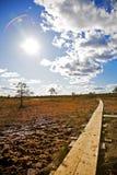Pântano de Kakerdaja em Estónia Fotos de Stock
