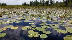 Pântano de Okefenokee Fotografia de Stock Royalty Free
