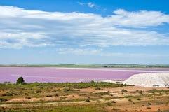Pântano de sal cor-de-rosa Imagens de Stock
