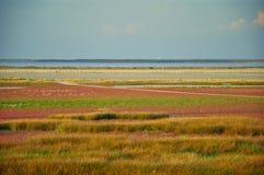 Pântano de sal velho Fotografia de Stock