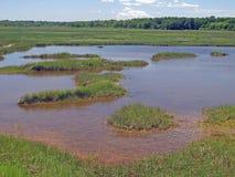 Pântano de sal, Wells Maine Fotografia de Stock Royalty Free