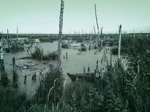 Pântano desinibido vazio assustador misterioso com árvores inoperantes e os barcos abandonados velhos Fundo natural monocromático fotos de stock