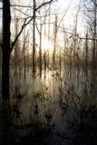 Pântano do inverno Fotos de Stock Royalty Free