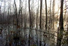 Pântano do inverno Fotografia de Stock Royalty Free