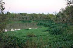 Pântano do lago Fotografia de Stock Royalty Free