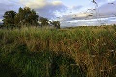 Pântano do outono Fotografia de Stock Royalty Free