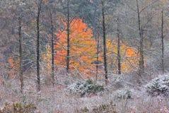 Pântano do outono com neve Fotografia de Stock