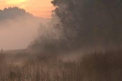 Pântano do outono no nascer do sol Foto de Stock Royalty Free