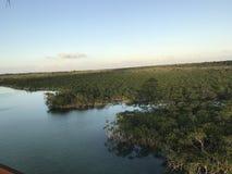 Pântano dos manguezais imagens de stock